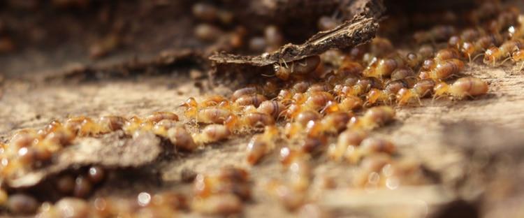 pest claim