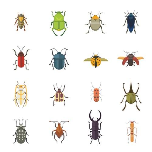 pest claims
