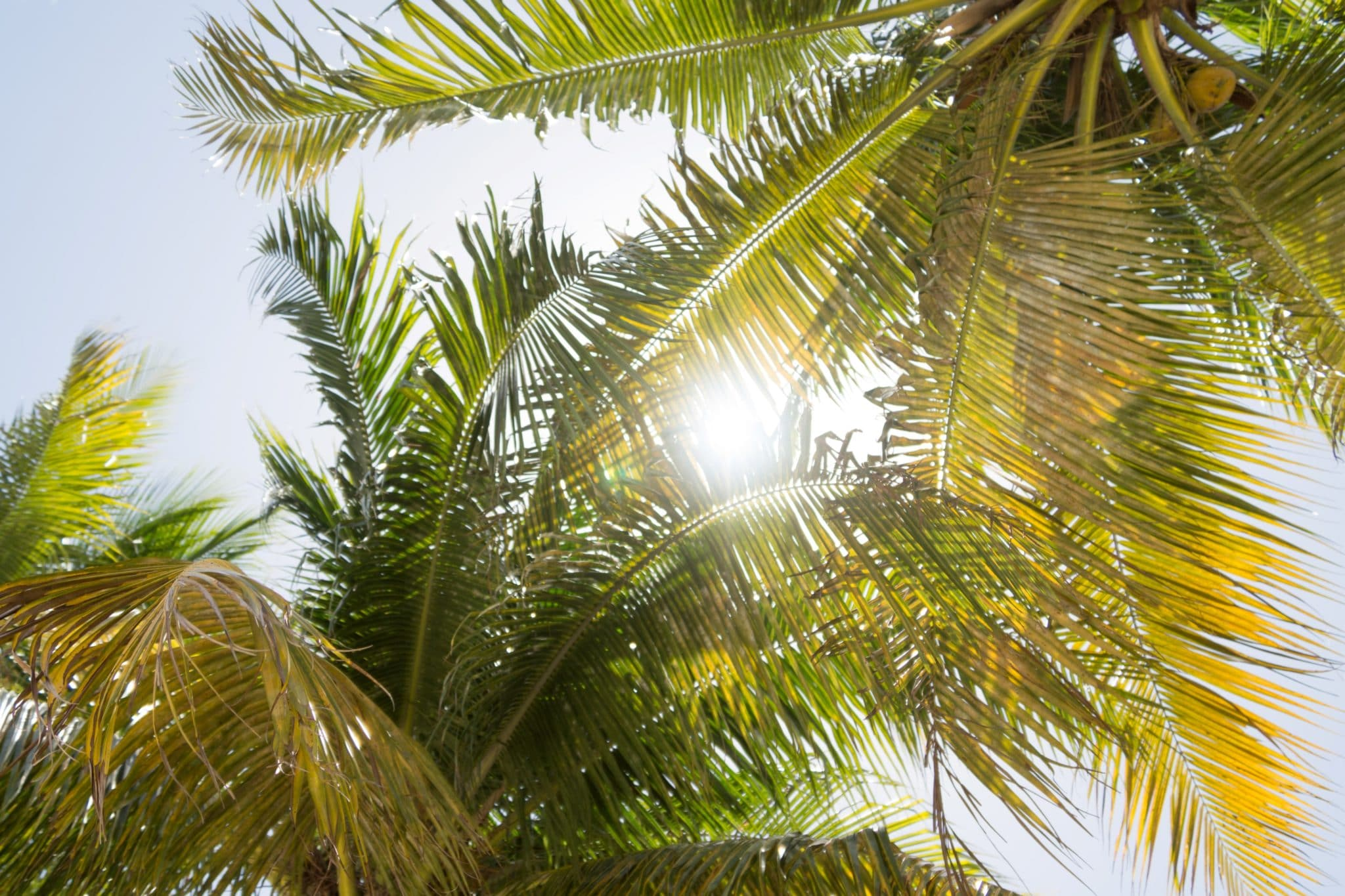 Florida palm trees with sunny, blue skies for the South Florida Classroom Training